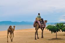 国家专题丨马拉维 Malawi-客户特点-进口商采购商名录